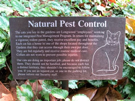 natural garden pest control homestead backyard