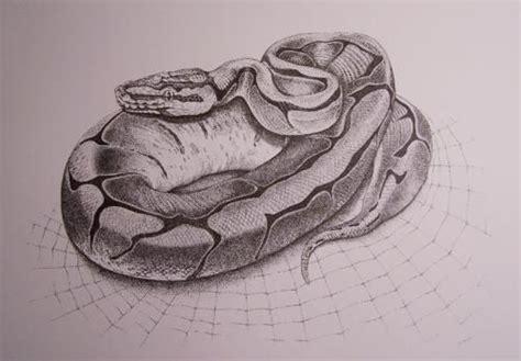 ball python tattoo python drawing spider python wetcanvas