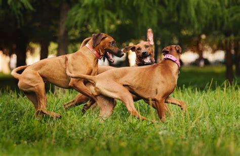 giardino condominiale regole accesso cani nel giardino condominiale