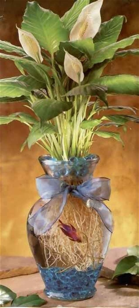 Betta Fish Vase by Betta Fish Vase This Is Wonderful Home