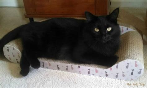 Kitty Couch And Cat Scratcher All In One Review Miss