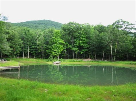 pond construction building repair and maintenance in