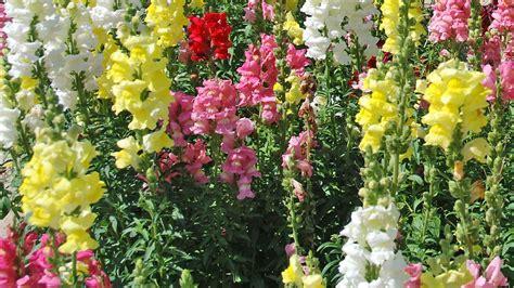 Landi Garten Pflanzen pflanzen landi