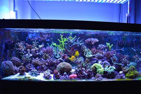 Lu Led Aquarium Air Laut aquarium led lighting orphek