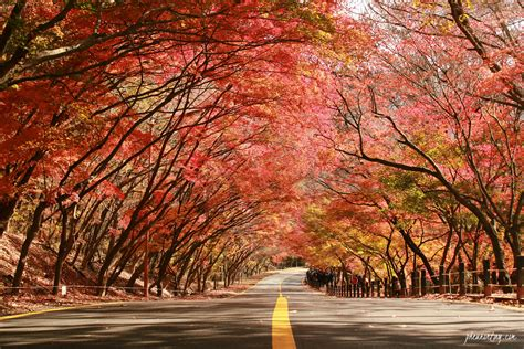 best korea insiderkr 4 best kept secret places to view autumn