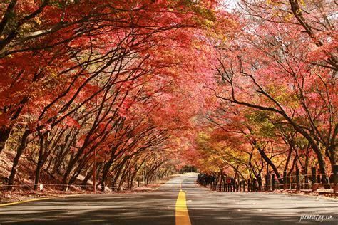 in korea insiderkr 4 best kept secret places to view autumn foliage in korea a korea