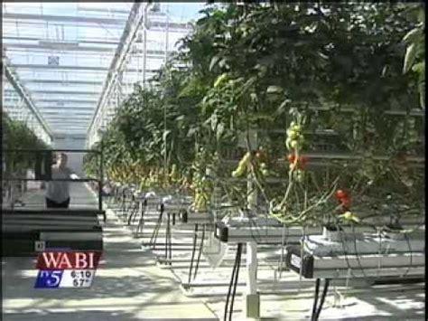 backyard farms maine backyard farms greenhouse expansion youtube