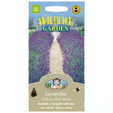 Bibit Bunga Lavender Asli jual benih lavender hidcote blue 100 biji mr fothergills