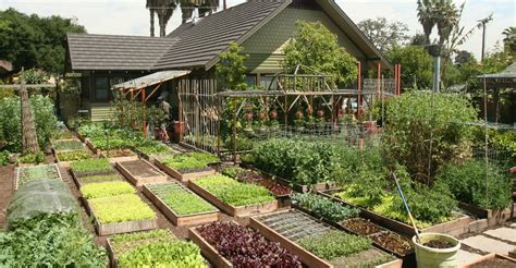 backyard agriculture backyard farming family grow all the food they need in their urban home s