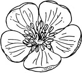 Ny State Flower - apple flower clipart etc