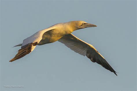 international bird rescue every bird matters 187 blog