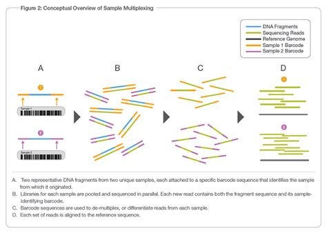 illumina sequencing method multiplex sequencing