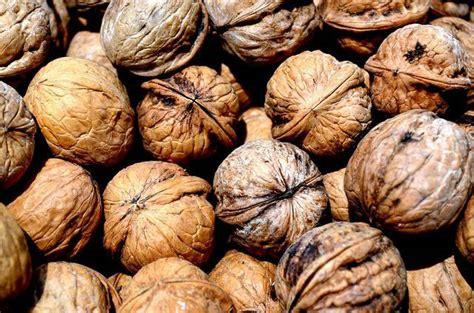 estera domian arachidi e noci fanno bene alla salute direttanews it