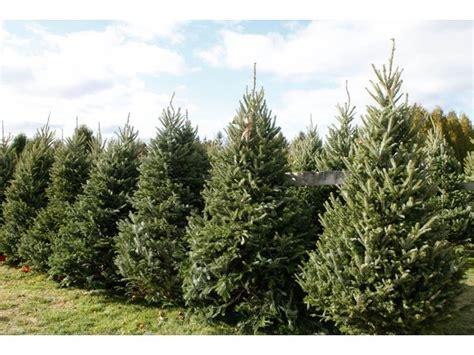 get your christmas tree locally forsyth christmas tree