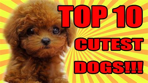 top ten cutest puppies top 10 cutest dogs 2016 2017