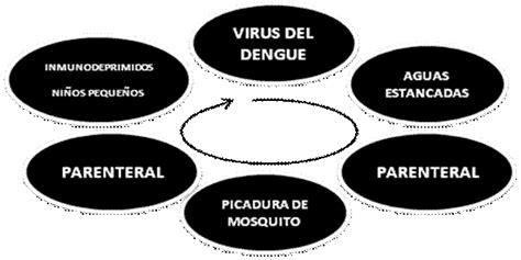 cadena epidemiologica fiebre tifoidea 4 4 modo de transmisi 243 n
