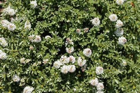 white flower bush texture lovetextures