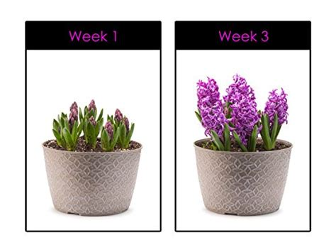 are grow lights bad for your hoont led grow light indoor plant flowers and herb