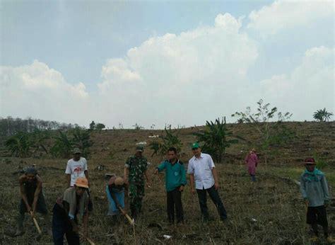 Bibit Jagung Manis Di Surabaya babinsa koramil bantu petani mengolah lahan jagung