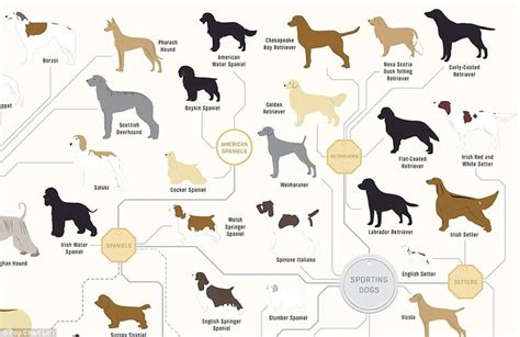 where do golden retrievers originate the family tree of dogs chart reveals how every breed s