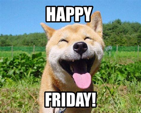 Dog Friday Meme - happy friday from brl test