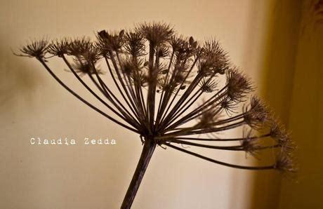 fiori di sardegna per la casa fiori di sardegna paperblog