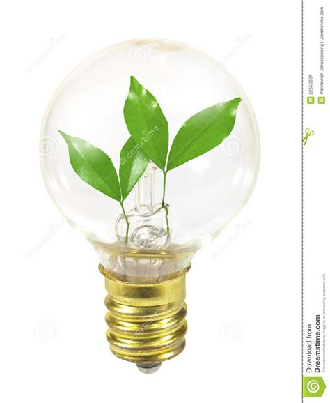 small light bulb with sprouts stock image image 22659901