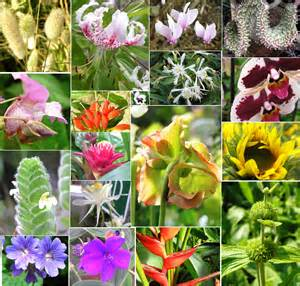 Variety Of Flowers For Garden Taxonomy Tentative Plant Scientist