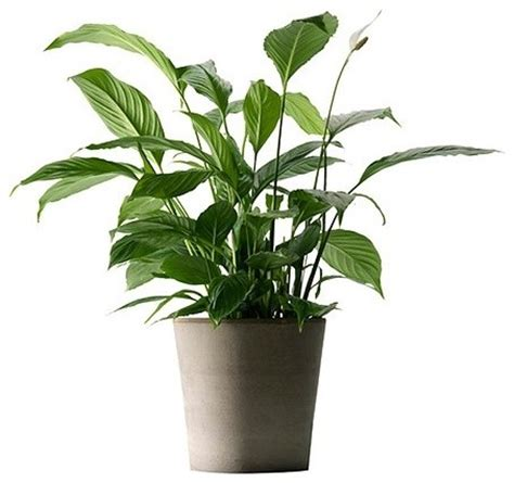 in door plants pot video three four plants argements mandel plant pot 9 189 quot eclectic plants by ikea