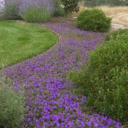 landscaping ground cover ideas ground cover home design ideas pictures remodel and decor
