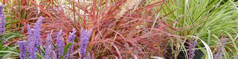winterharte pflanzen für den garten 5 gr 228 ser pflegeleicht und winterhart f 252 r den garten dehner