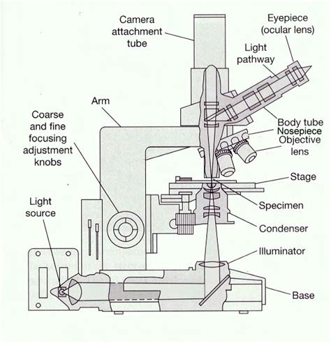 light microscope diagram the compound light microscope hourlybook