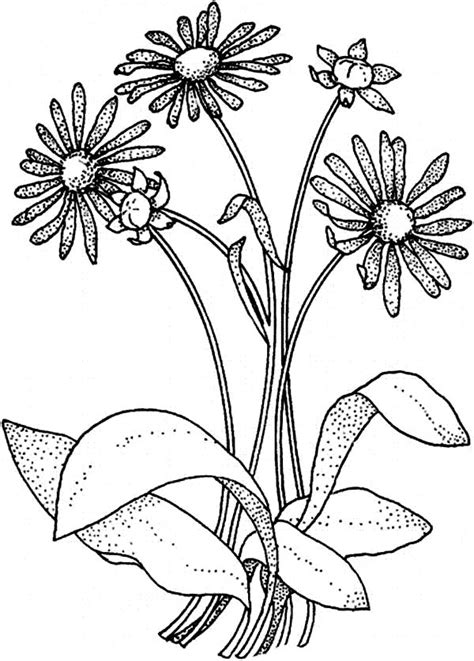 yellow elder coloring page yellow elder flower free coloring pages