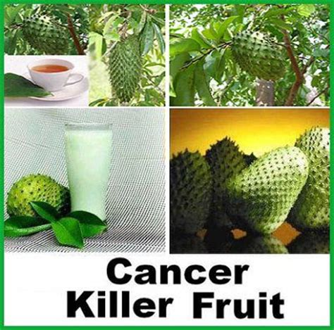 guyabano research paper soursop healthy foods leaves