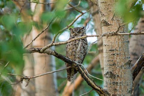 owl tree owl christopher martin photography