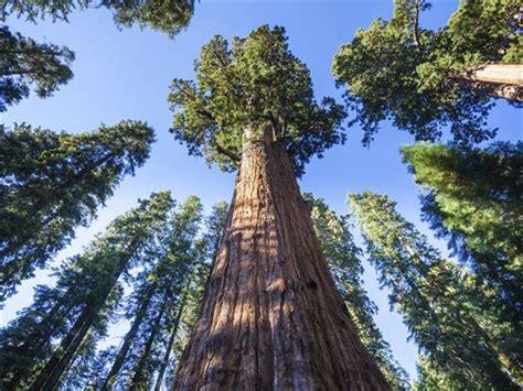 California's Great National Parks, California   American Sky