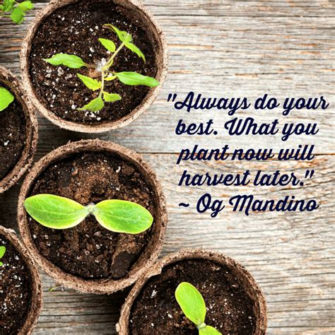 always do your best what you plant now will harve picture quote by og mandino
