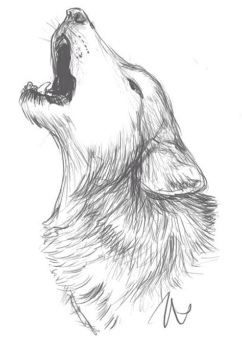 Drawing Wolf by Wolf Drawing Idea Drawings Drawings Wolf Sketch