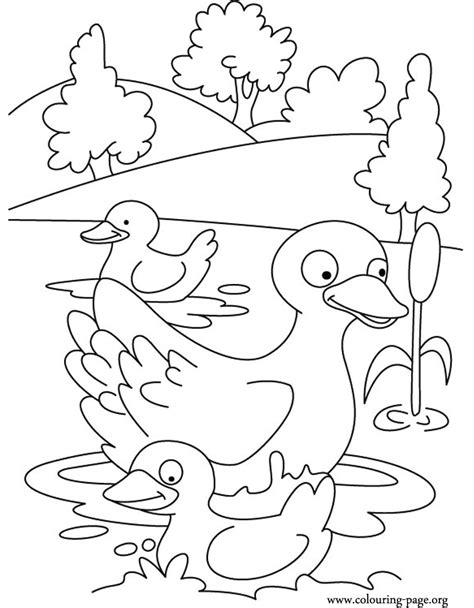 coloring pages of mallard ducks free coloring pages of baby ducks