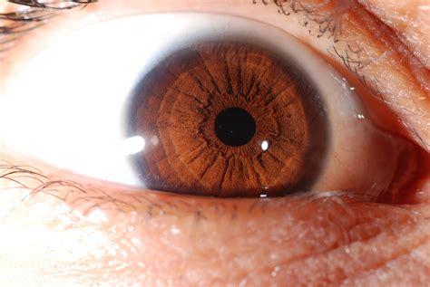 alimentazione candida riconoscere la candida albicans con l iridologia