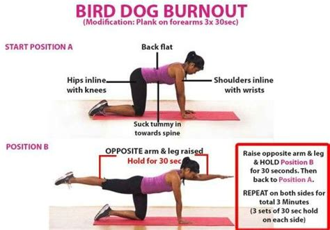 bird dogs workout bird burnout workouts dogs and birds