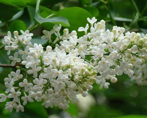 Imagini cu flori de primavara   Photoblog