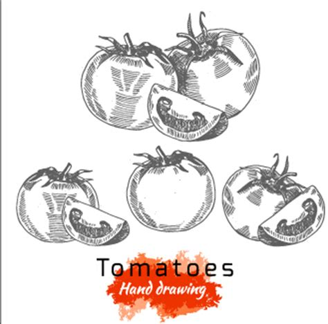 hand drawing tomatoes vector vector food