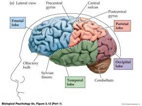 frontal cortex what s the best way to remember all the