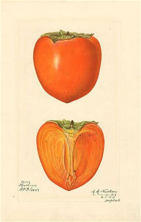 Keset Kaki Printing Fruits Berkualitas persimmon pudding the oakland standard
