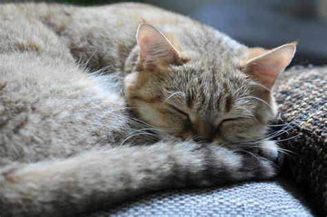 schlaf gut auf türkisch schlaf gut foto bild tiere haustiere katzen bilder