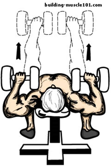 how to do a flat bench press the dumbbell bench press