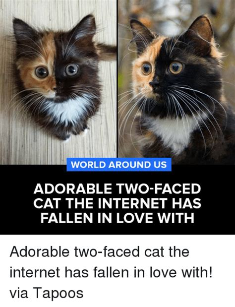 Two Face Meme - 25 best memes about two faced cats two faced cats memes