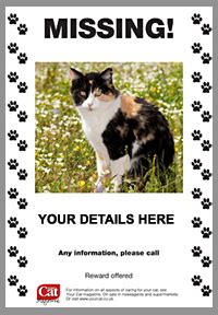 Design Poster Lost Cat | design your missing cat poster