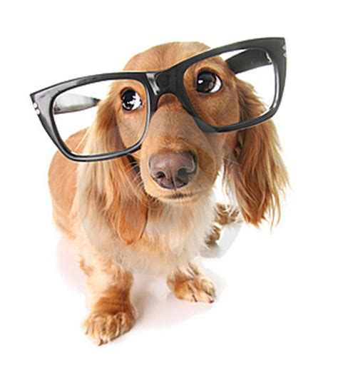 smart puppy dogs are they as smart as we wish to think siowfa12 science in our world